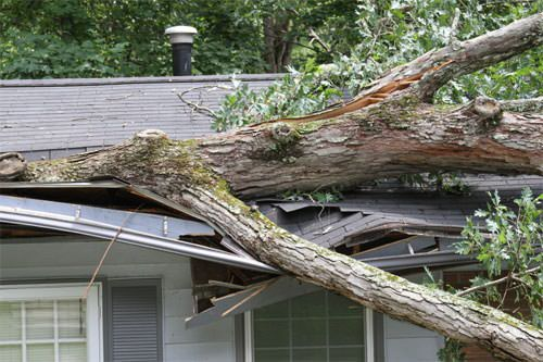 Fallen Branch In Bethel After A Storm.